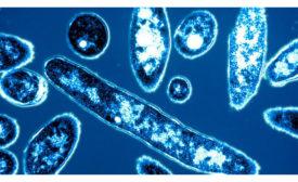010919-Legionella