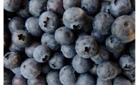 031721-blueberries