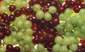 Red green grapes USDA photo by Scott Bauer