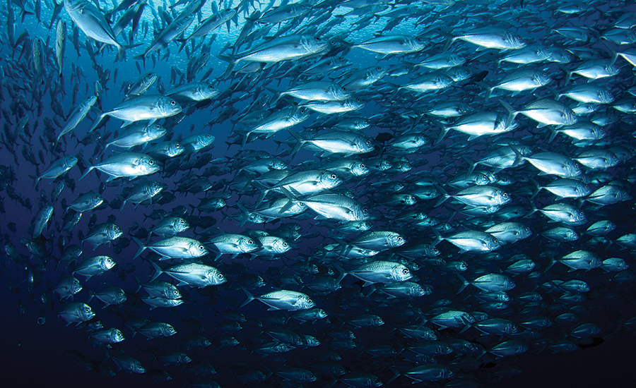 fish and other aquatic life drawn into cooling water systems